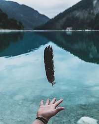 Home. Small feather and lake